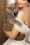 The smilling  bride keeps her cat Stock Photos