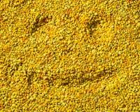 Smilling hace frente en la superficie del polen de la abeja, concepto sano de la vida Foto de archivo