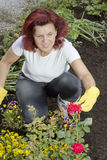 Smilling women gardener arranging her roses Stock Photos
