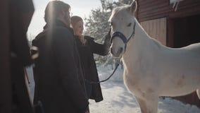 Smillings blonde vrouw en lange gebaarde man die zich met wit paard bij de boerderij van de sneeuwwinter bevinden Het meisje stri stock footage
