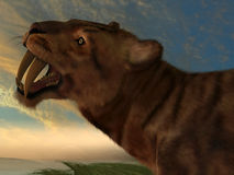 Smilodon Cat. The Saber-Tooth Cat also called Smilodon had dagger like front canine teeth royalty free stock image