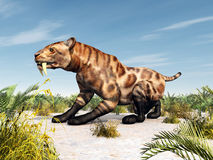 Smilodon Stock Photography