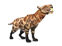 Smilodon Royalty Free Stock Photos