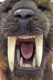 Smilodon - Saber Tooth Tiger stock photography