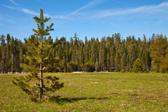 Smith Meadows. Early Spring morning at Smith Meadows in Yosemite National Park, California stock images