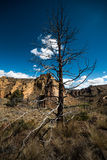 Smith Rock State Park Tree Immagine Stock