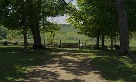 SmithField种植园 库存照片