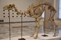 Smithsonian American Art Museum in Washington, DC Stock Photography