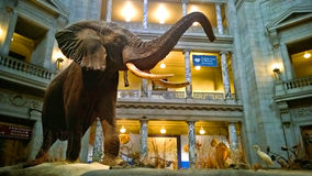 Smithsonian Museum of Natural History Stock Images