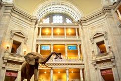 Smithsonian Musuem, DC Lizenzfreies Stockfoto