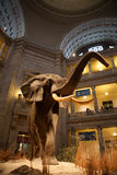 Smithsonian Natural History Museum, DC Royalty Free Stock Photography