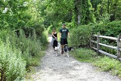 Smithtown blydenburgh park hiking with dogs getaway stock photos