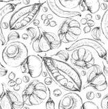 Sömlös hand dragen bakgrund Skissa stiluppsättningen av grönsaker Tappningecomat också vektor för coreldrawillustration Arkivfoto
