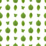 Sömlös modell av gröna sidor Arkivfoton