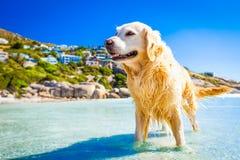 Smmer-Ferienhund Stockfotos