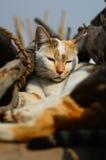 Sömnig katt i solen Arkivfoto