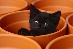 Sömniga gulliga Kitten Inside en Clay Pot Arkivbild