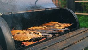 Smocked scomber cooking in the metal smokehouse. stock footage
