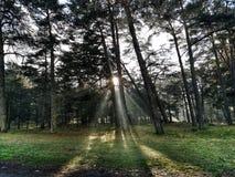 Smog della foresta in primavera fotografie stock