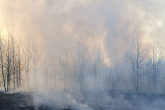 Smog in forest fire. It is special nature protection action to make better habitat for rare heathland connected species Stock Image