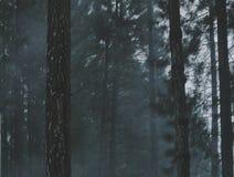 Smoggy skog Arkivfoto
