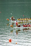 smok łódkowata rasa Fotografia Royalty Free