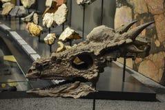 Smok czaszka Obrazy Royalty Free