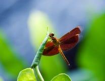 smok fly Zdjęcie Royalty Free