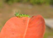 Smok Głowiasty Caterpillar Obrazy Royalty Free