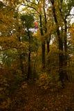 Smok kania łapiąca w drzewnych wierzchołkach Obraz Royalty Free