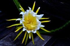 Smok owoc kwiaty Obrazy Stock
