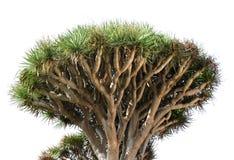 smoka drzewa biel Fotografia Royalty Free