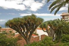 smoka drzewo Fotografia Stock