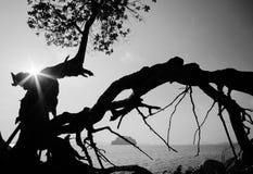 Smoka drzewo Czarny i biały sylwetka drzewo Obrazy Royalty Free
