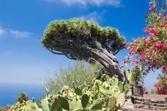 Smoka drzewo przy losem angeles Palma Fotografia Stock