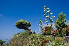 Smoka drzewo przy losem angeles Palma Zdjęcia Royalty Free