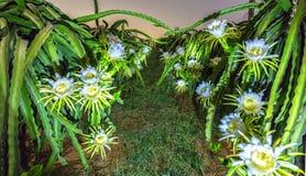 Smoka kwiatu ogródu kwiat przy nocą zdjęcie royalty free
