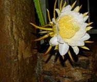 Smoka Owocowy kwiat Obrazy Royalty Free