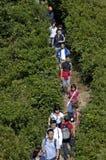 Smoka ` s plecy próba, natura spacer za miastem Hongkong Zdjęcia Stock