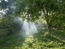 Free Smoke And Sunny Rays In The Garden. Summer Sun Fire Danger.. Royalty Free Stock Images - 182541829