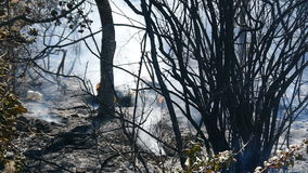 Smoke and ashes after a forest fire. stock footage
