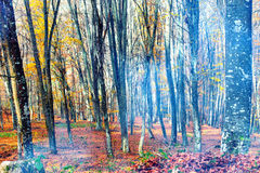 Smoke in the autumn forest Stock Images
