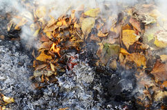 Smoke from burning leaves Royalty Free Stock Photo