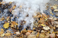 Smoke from burning leaves Stock Images