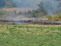 Smoke emission after vegetation fire. In the field in a hot summer day Royalty Free Stock Image