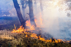 Smoke from a fire in the forest. Smoke from a fire in the forest royalty free stock photography