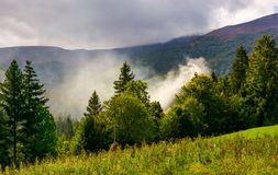 Smoke from the fire in forest. Mountainous summer landscape. environmental problem and ecology disaster of Carpathian countryside Royalty Free Stock Image