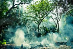 The smoke from the fire in the jungle. The sun`s rays make their way through the trees. Hot tropical climate caused a fire.  stock image
