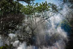 The smoke from the fire in the jungle. The sun`s rays make their way through the trees. Hot tropical climate caused a fire.  royalty free stock images