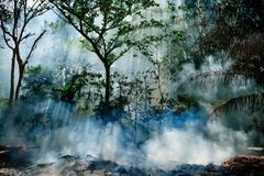 The smoke from the fire in the jungle. The sun`s rays make their way through the trees. Hot tropical climate caused a fire.  stock photo